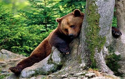 Απειλούμενα είδη στο πάρκο Belitsa | Lucky Bansko