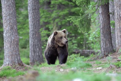 Αρκούδες στο Πάρκο Μπελίτσα | Lucky Bansko