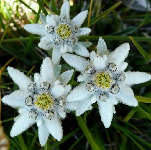 Πάρκο Φυτών Πιρίν | Lucky Bansko
