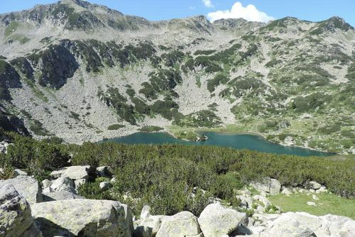 Εικόνα της λίμνης Banderishko ψαριών | Lucky Bansko SPA & Relax