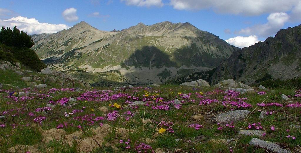 Πάρκο περιοχές στο βουνό Πιρίν