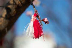 Όμορφη μαρτενίτσα σε ένα δέντρο | Lucky Bansko